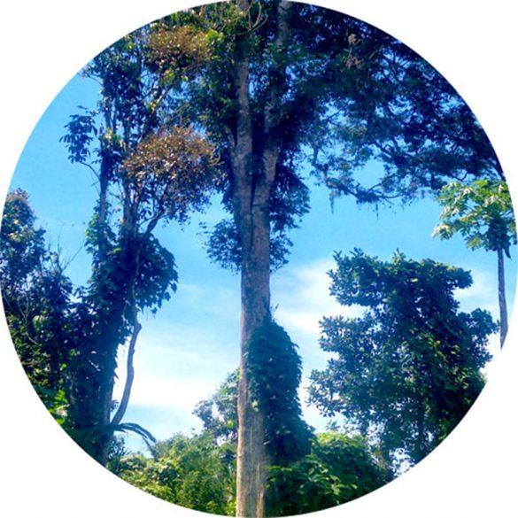 Agarwood illatolaj (Oud) 100 ml