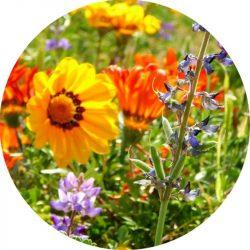 Floral Beauty Allergénmentes illatolaj
