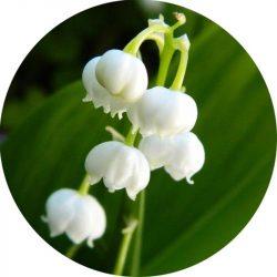 Gyöngyvirág illatolaj