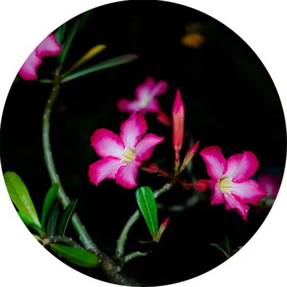 Night Flower Allergén mentes illatolaj 100 ml