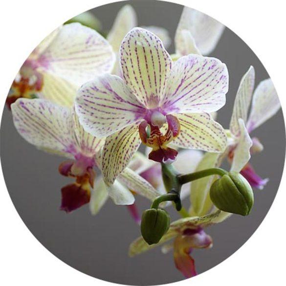 Orchidea 100% illatolaj