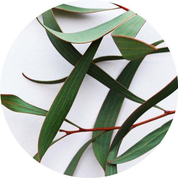 Eukaliptusz illóolaj 50 ml